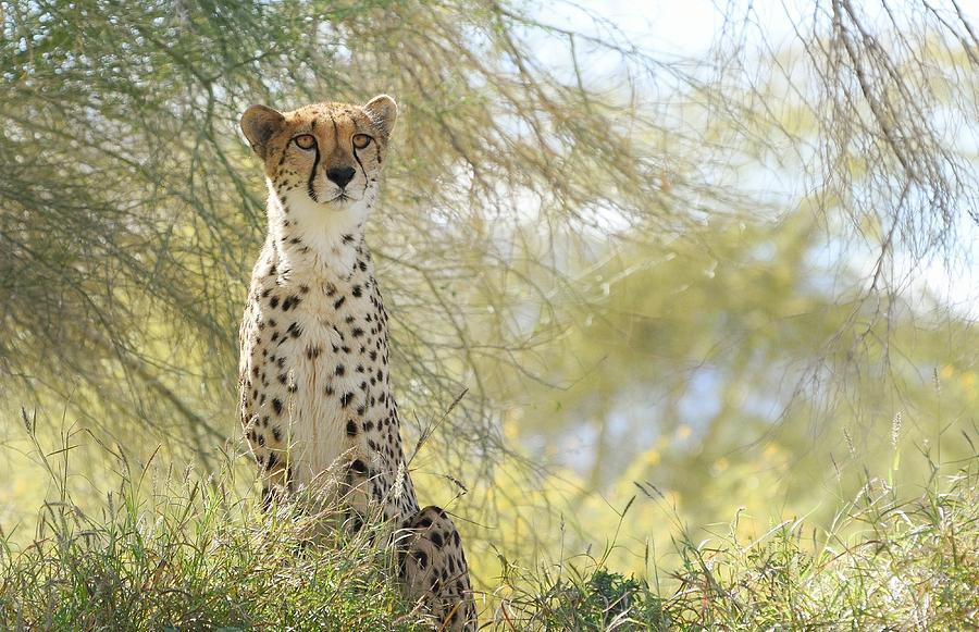 Watchful Eyes by Fraida Gutovich