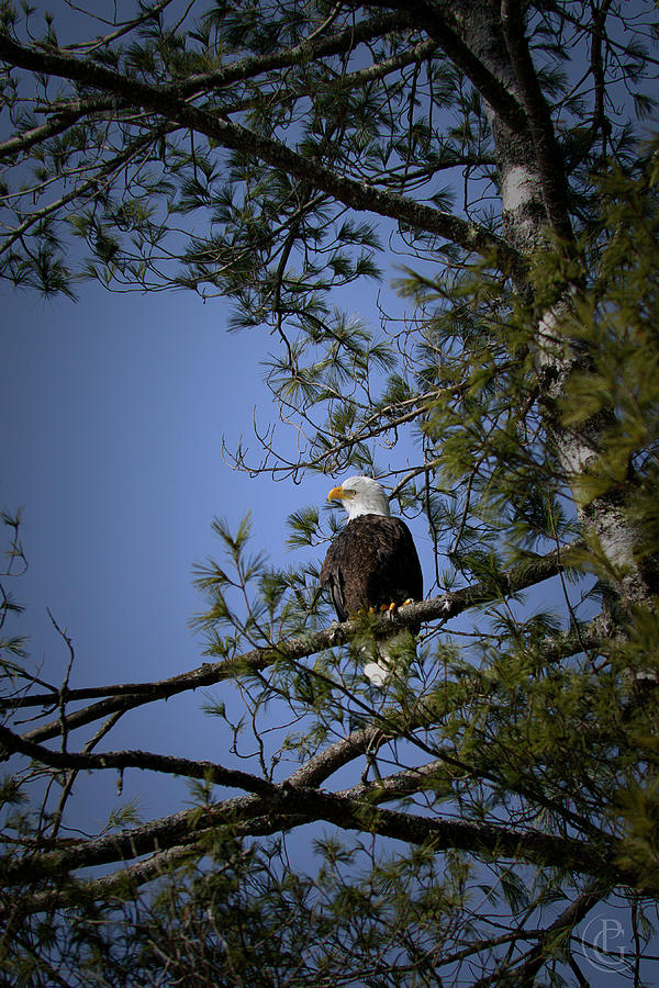 Watching Me by Patrick Groleau