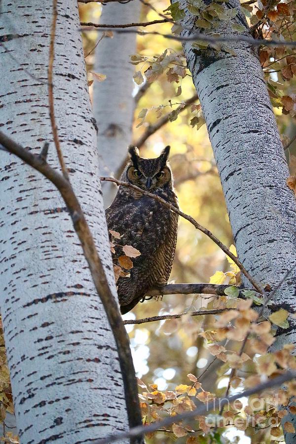 Watching Owl by Carol Groenen