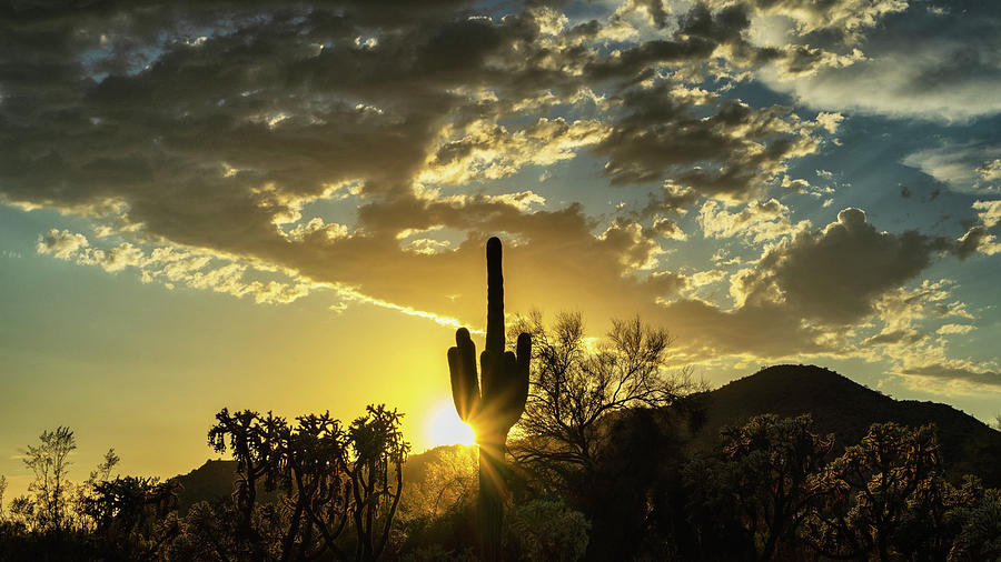 Saguaro Sunset Photograph - Watching The Sun Go Down In The Sonoran  by Saija Lehtonen