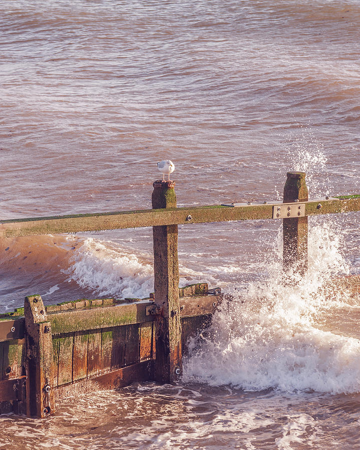 Waves Photograph - Watching the Waves by A J Paul