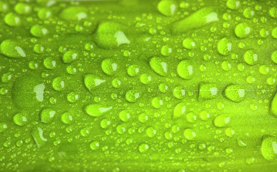 Water Drop On Green Leaf Background Photograph by Ruslandashinsky