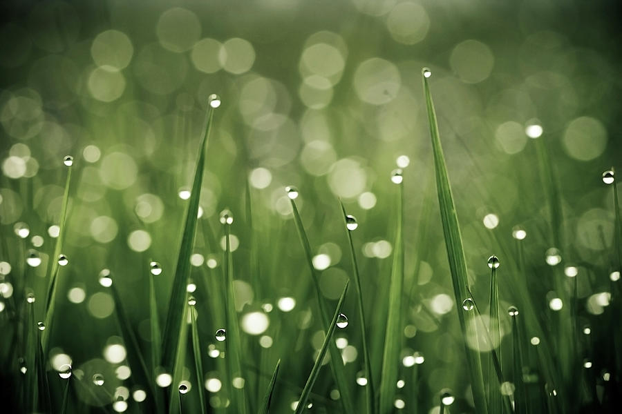 Water Drops On Grass Photograph by Florence Barreau
