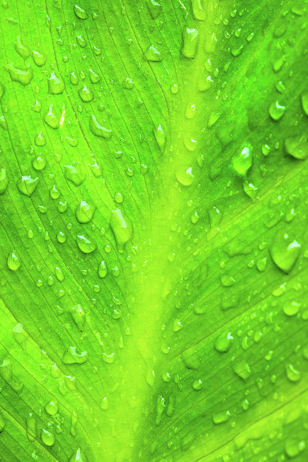 Water Drops On Green Leaf Photograph
