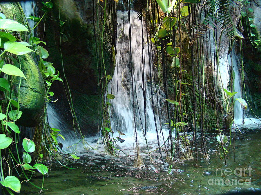 Water Photograph - Water Feature  by Michael MacGregor