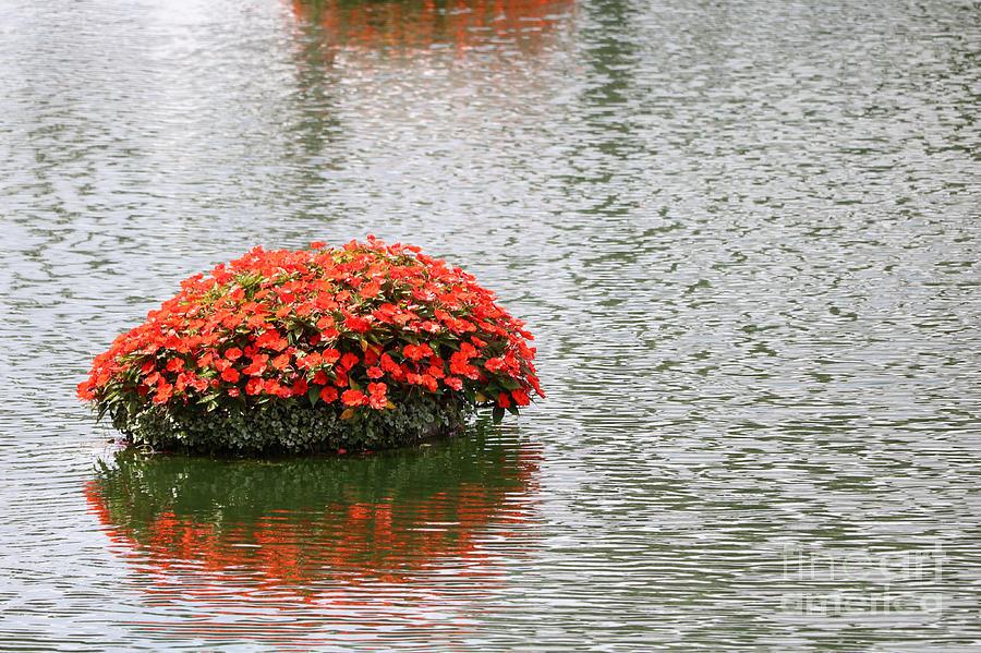 Water Garden Photograph