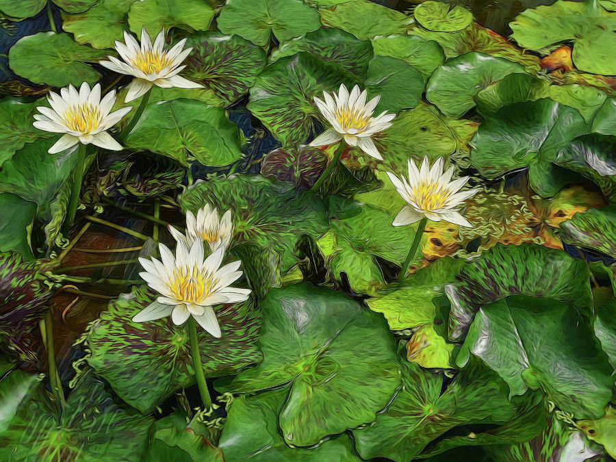 Water Lillies 16 Photograph