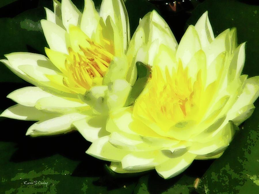 Water Lilies by Karen Conley