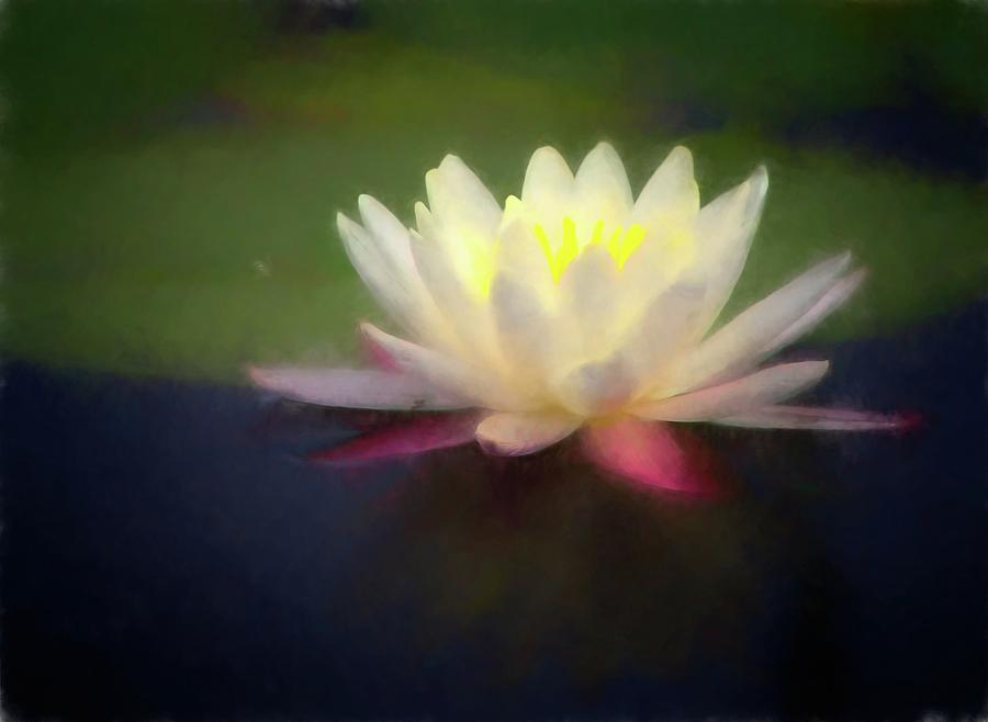 Water Lily 1 by Steve DaPonte