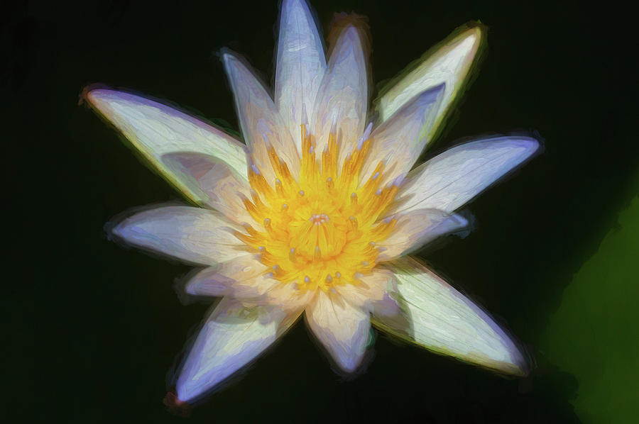 Water Lily 100 by Rich Franco