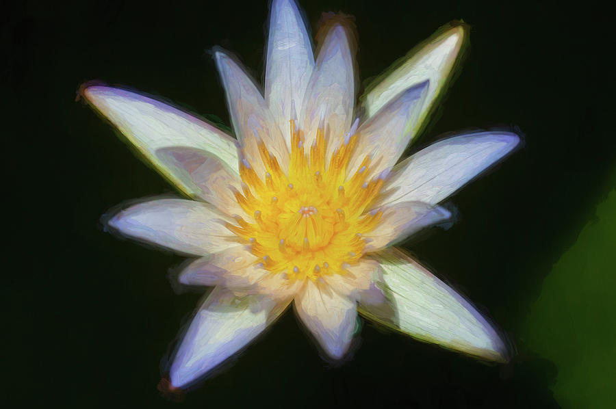 Water Lily 101 by Rich Franco