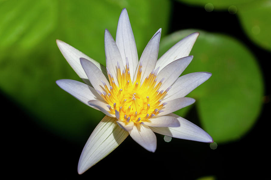 Water Lily 102 by Rich Franco