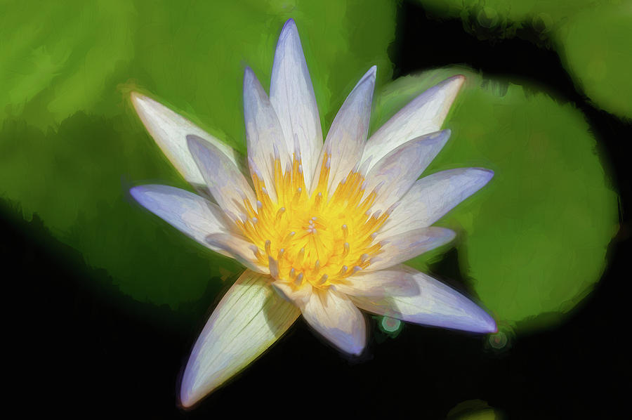 Water Lily 105 by Rich Franco