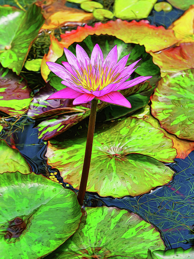Water Lily 51 Photograph