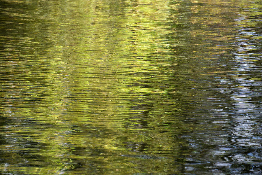 Water Reflection_521_17 by Tari Kerss