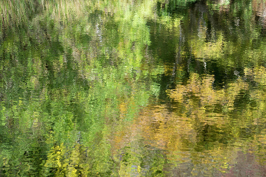 Water Reflection_598_17 by Tari Kerss