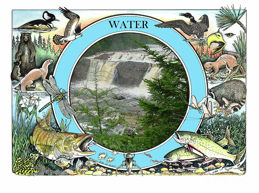 WATER - The Circle of Life by Art MacKay