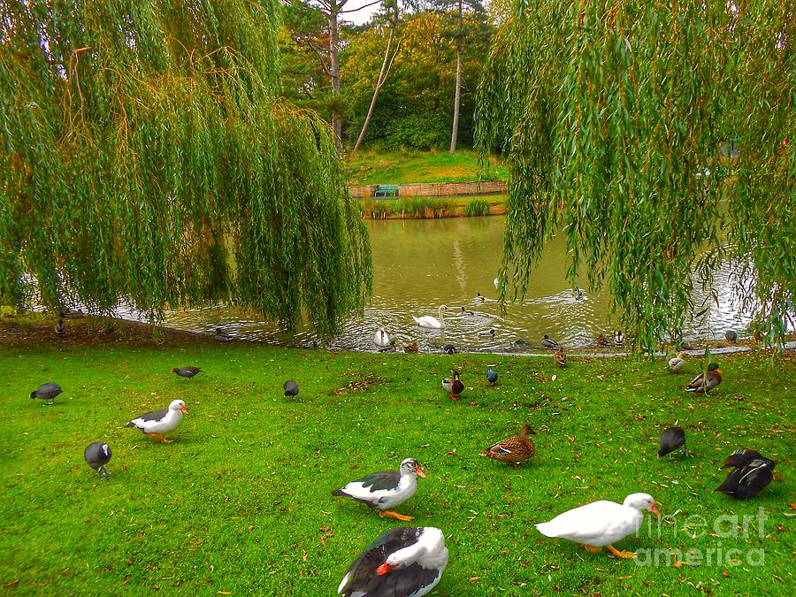 Waterbirds by The Willow Trees by Joan-Violet Stretch