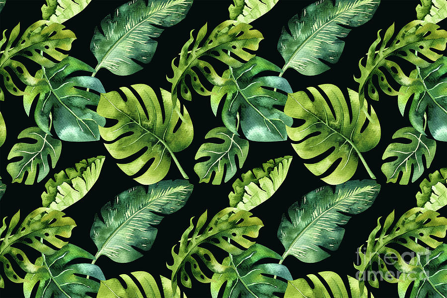 Watercolor Botanical Tropical Palm Leaves On Solid Black Background Digital Art By Melissa Fague Trandy tropical leaves on turquoise slate background. watercolor botanical tropical palm leaves on solid black background by melissa fague