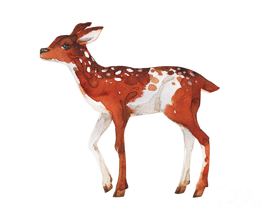 Small Digital Art - Watercolor Dotted Fawn Painting. Hand by Kat branches