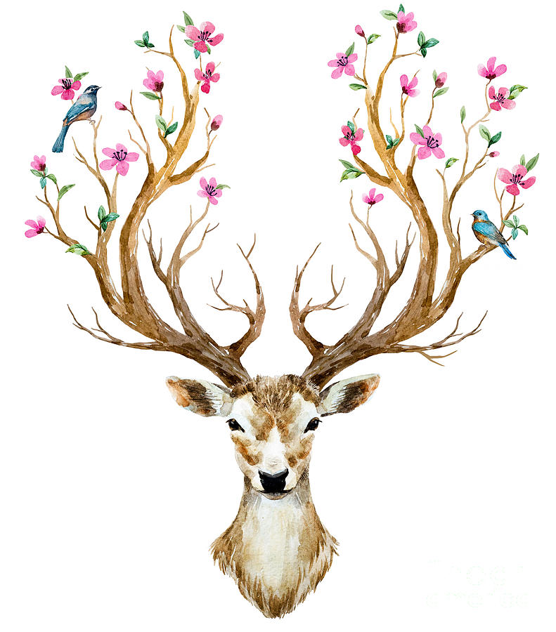Deer Digital Art - Watercolor Illustration Isolated Deer by Anastasia Lembrik