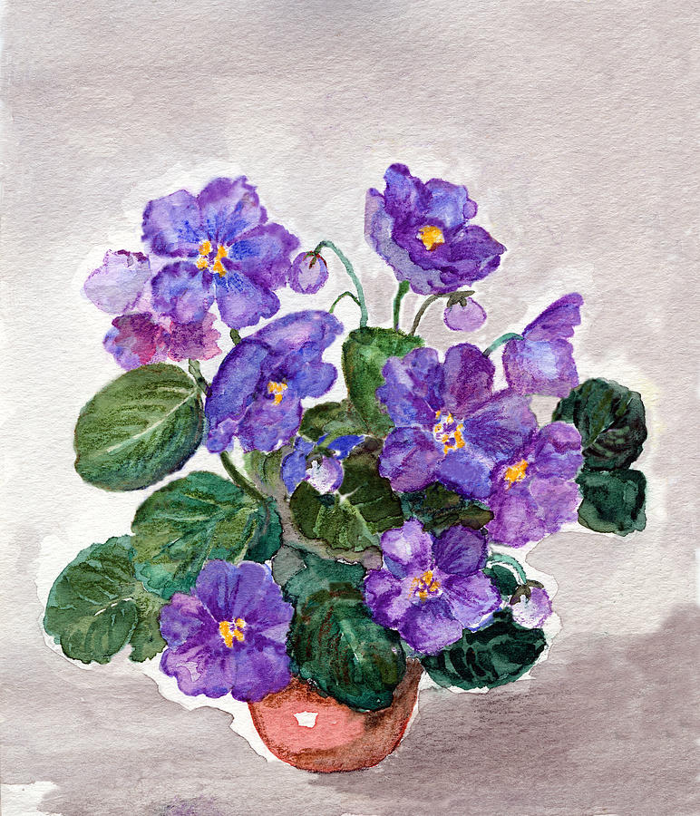 Watercolor Painting Of   African Violet Digital Art by Mitza