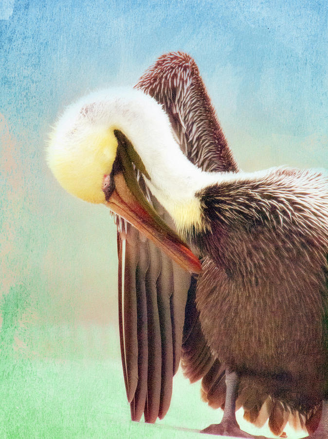 Watercolor Pelican by Andrea Layne