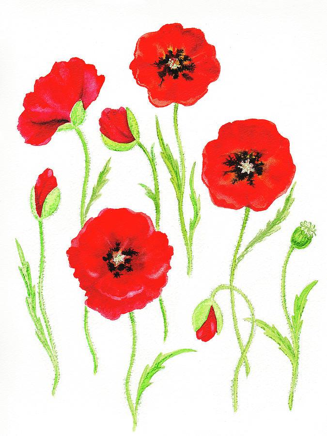 Watercolor Red Poppies Flowers Poppy Art Painting By Irina Sztukowski
