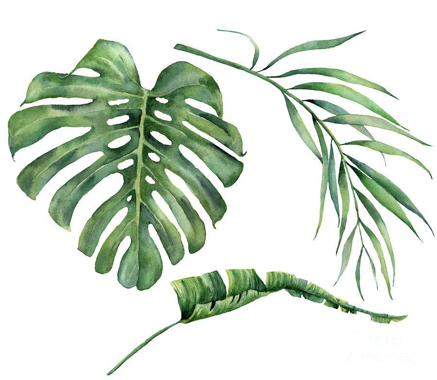 Watercolor Set With Tropical Tree Digital Art by Yuliya Derbisheva