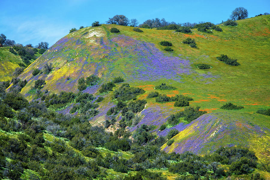 Watercolor Wonders on the Carrizo - Superbloom 2019 by Lynn Bauer