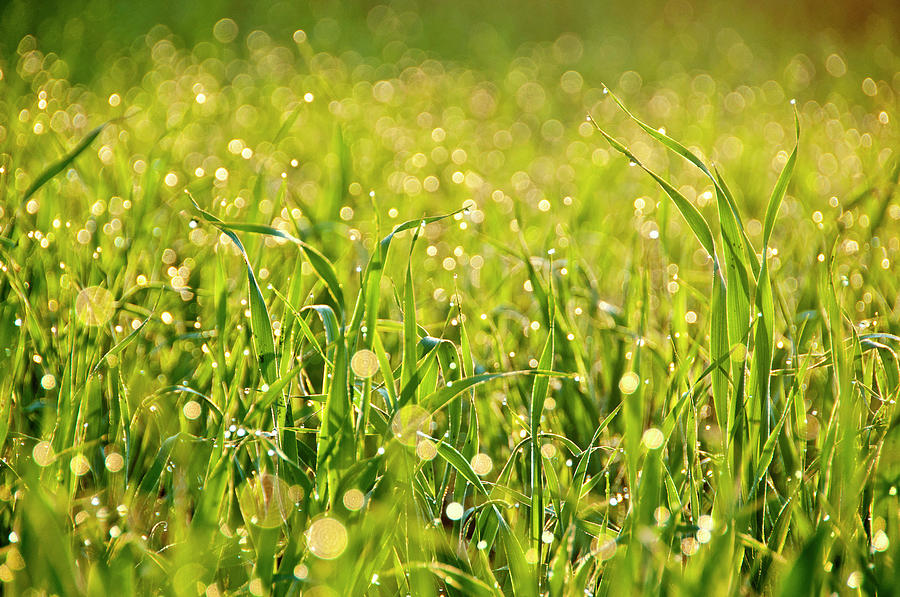 Waterdrops On Grass Photograph by Pkg Photography