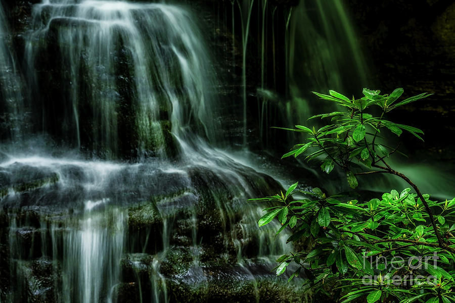 Waterfall and Rhododendron, Light and shadow by Thomas R Fletcher