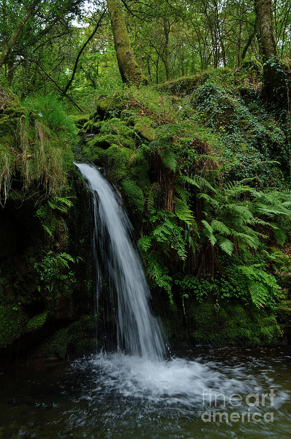 River Photograph - Waterfall In The Middle Of Carvalhais Forest by Angelo DeVal