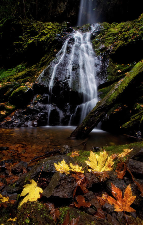 Foliage Photograph - Waterfall Maple Leaves by Thomas Haney