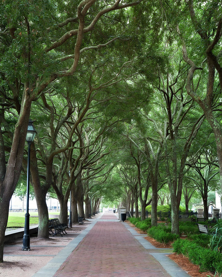 Waterfront Walkway by Lana Trussell
