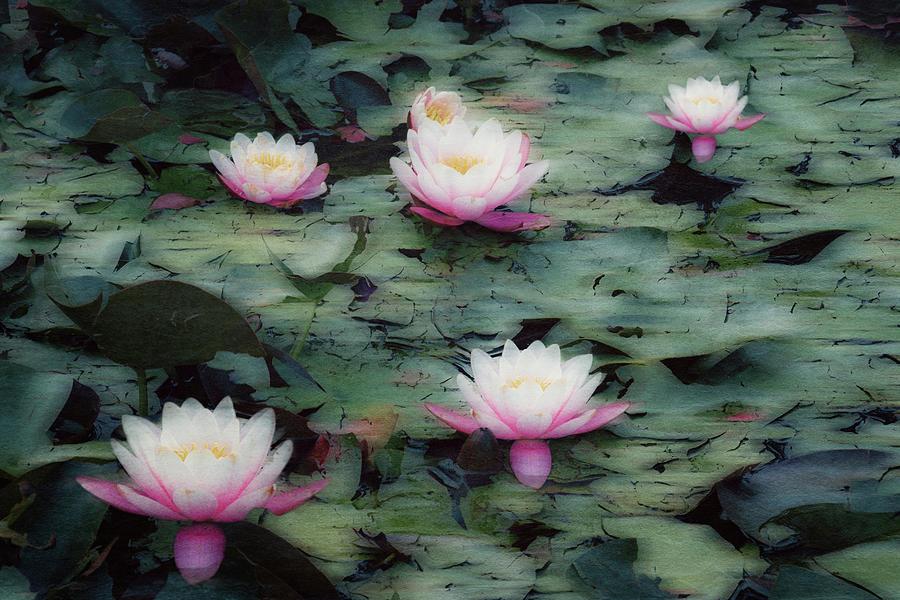 Water Lily Photograph - Waterlily Impressions by Dirk Wuestenhagen