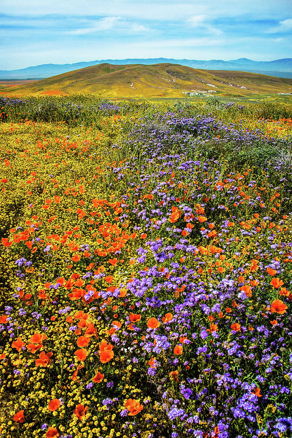 Waves of Color - Superbloom 2019 by Lynn Bauer