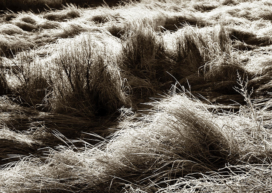 Wave Photograph - Waves Of Grass by Day Williams