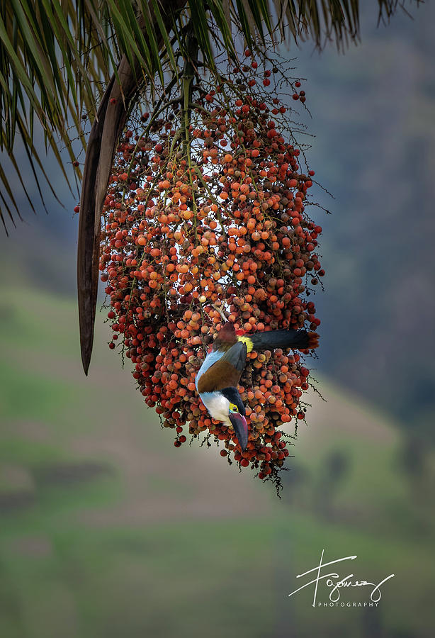 Wax Palm and The Tucan by Francisco Gomez