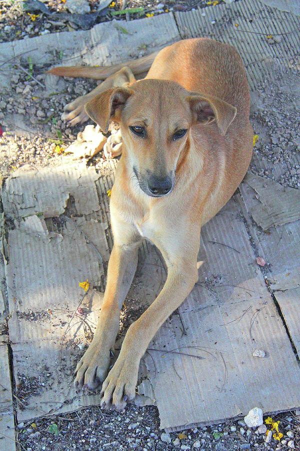 Wayside Dog by Nareeta Martin