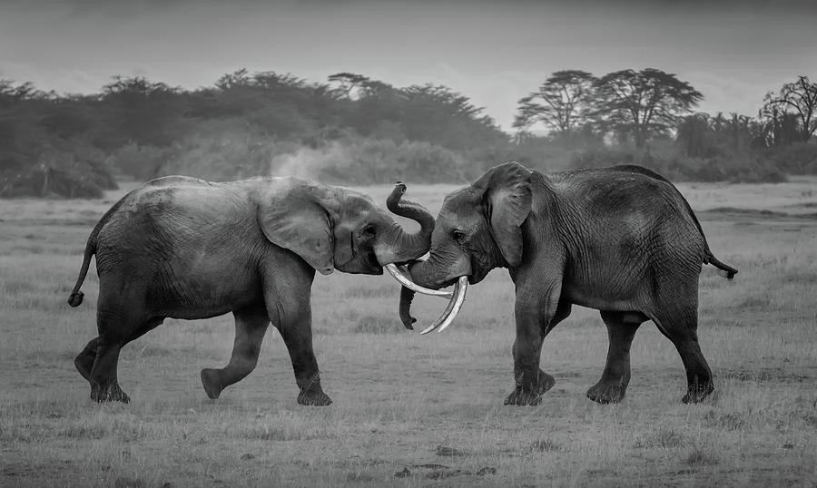 Elephant Photograph - We Are Brothers by Leah Xu