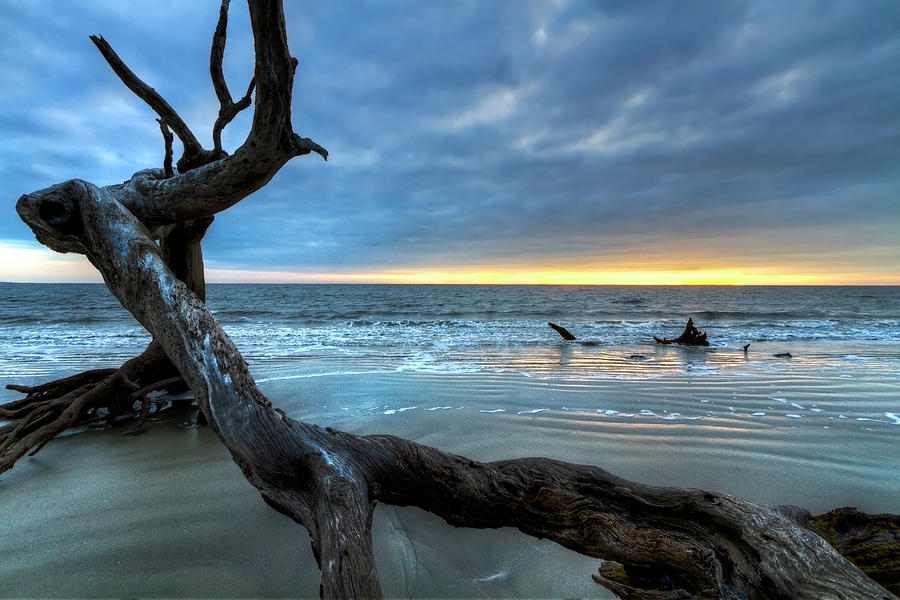 Clouds Photograph - Weathered Tree At Low Tide by Debra and Dave Vanderlaan