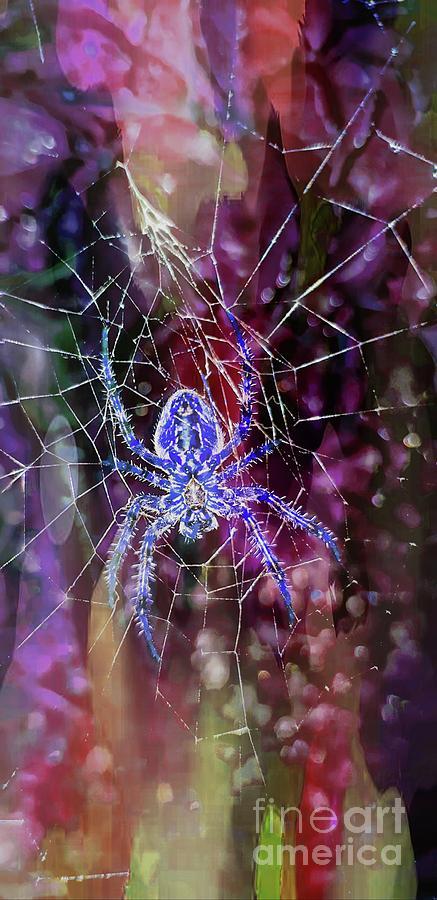 Web designer by Jolanta Anna Karolska