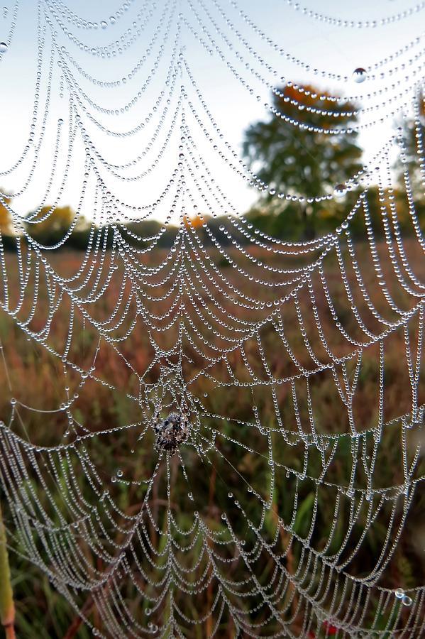 Web On A Prairie Morning by Carolyn Fletcher