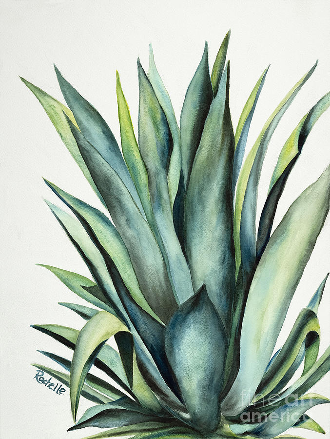 Arizona Weber S Agave Painting By Rochelle Lang