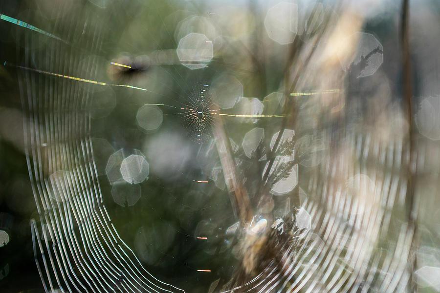 Weborama by Robert Potts