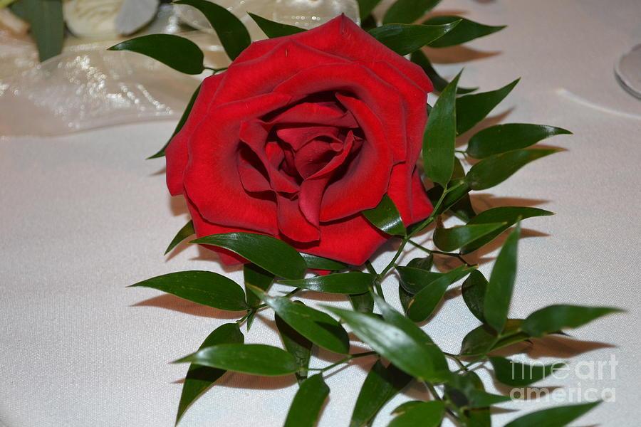 Wedding Rose by Barbra Telfer