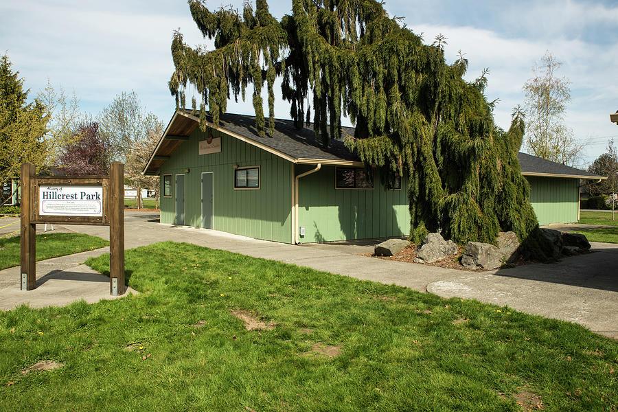 Weeping Cedar at Hillcrest Park by Tom Cochran