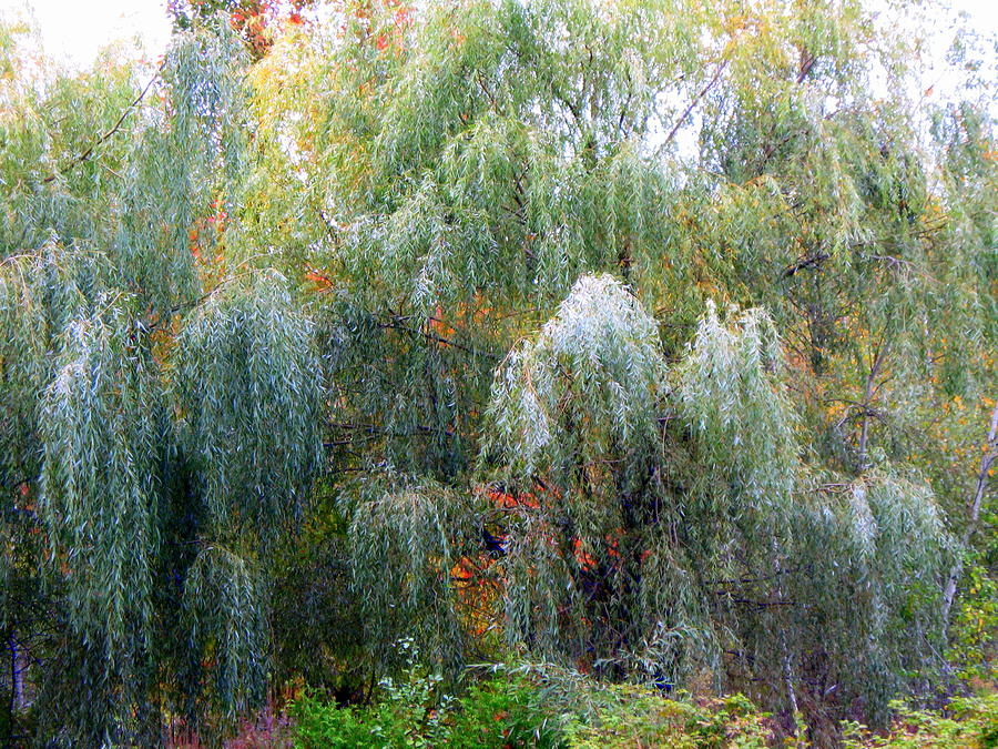Weeping by Richard Stanford