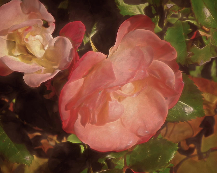 Weeping Rose  by Lynda Lehmann